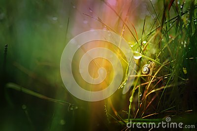 Snail in the grass wallpaper