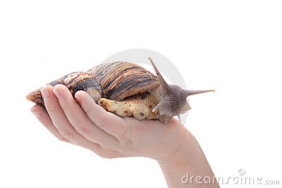 Snail in the hand
