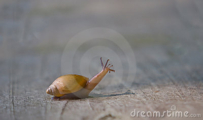 Snail with head up