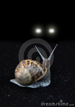 Snail in Headlights