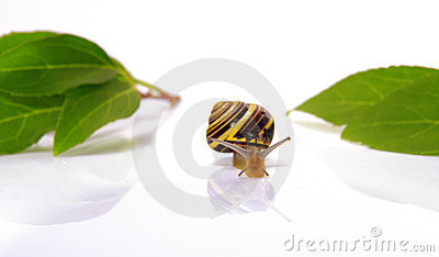 Snail and leafs