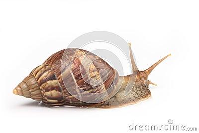 Snail macros  3