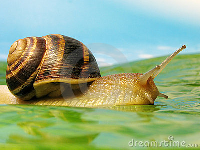 Snail on a meadow