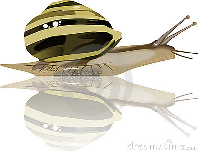 Snail mollusc slow shell