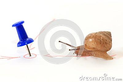 Snail in mot målet.