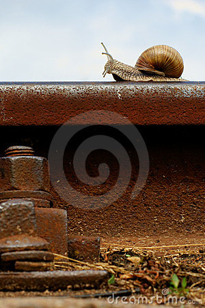 Free Snail On A Railway Rail Stock Images - 6690314