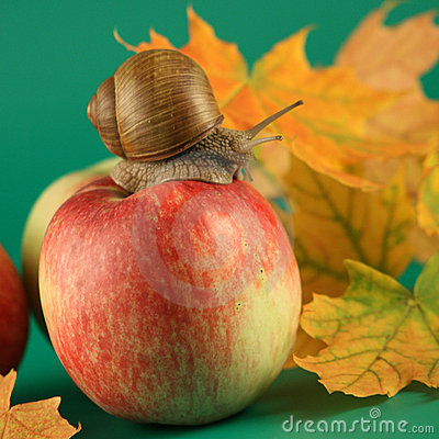 Free Snail On An Apple Royalty Free Stock Photos - 3176078
