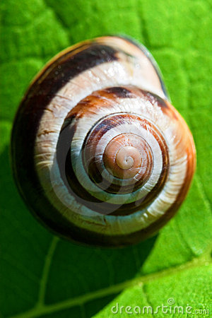 Free Snail On Green Royalty Free Stock Photos - 16991428