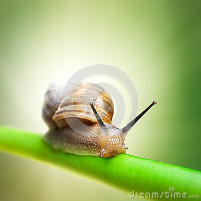 Free Snail On Green Stem Stock Photography - 24767622
