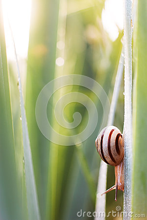 Free Snail On Meadow Royalty Free Stock Photo - 42763765