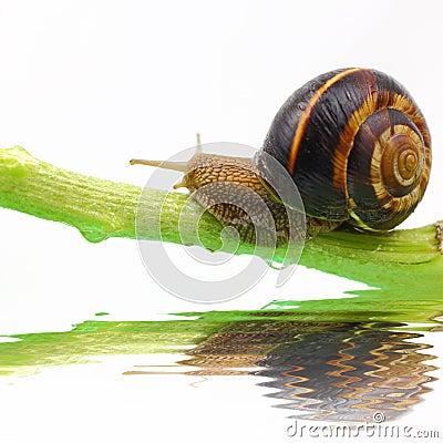 Free Snail On Plant Stem Stock Photos - 41419283