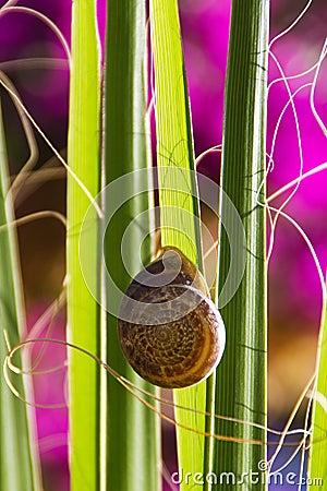 Snail on a palm leaf