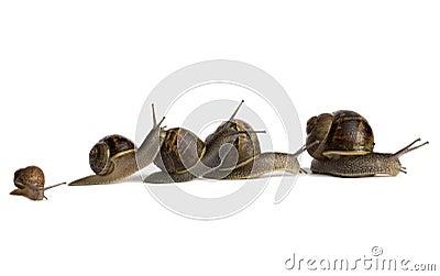 Snail Pile-Up