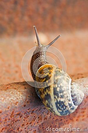 Snail on the rail