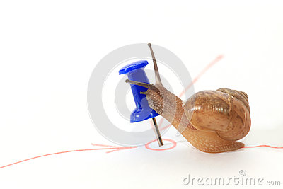 Snail reaching the goal and kiss the target.