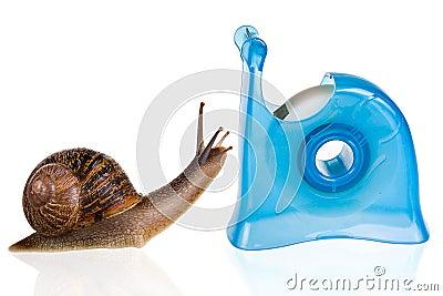 Snail romance