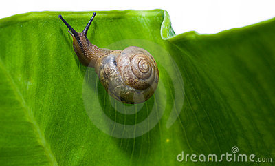 Snail s Upward Climb