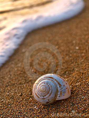 Snail on sandy beach