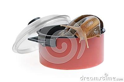 Snail in saucepan