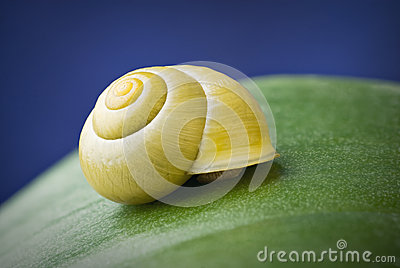 Snail with shell on leaf