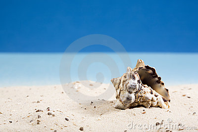 Snail shell in sand at beach