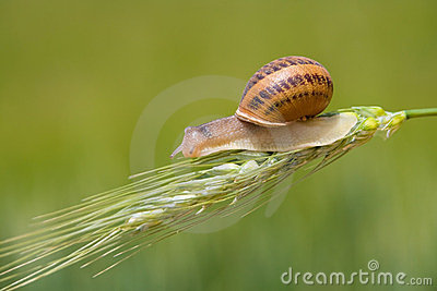 Snail on a spike