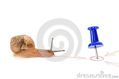 Snail towards the goal.