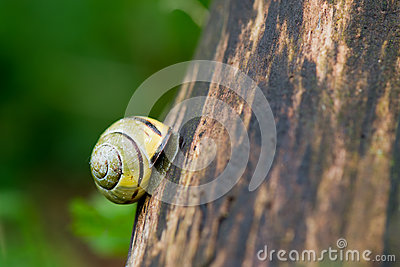 Snail at the tree
