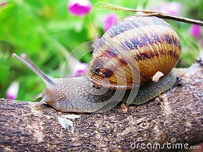 Snail trip