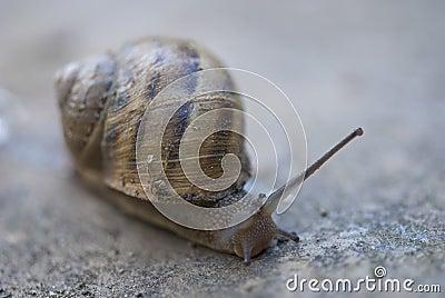 Snail on a Tuscan Garden, Italy