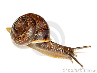 Snail on white