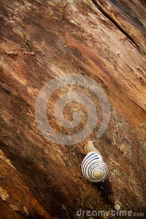 A snail on a wooden background