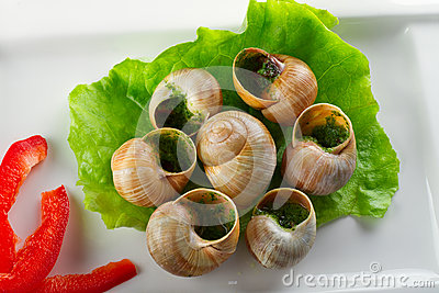 Snails in garlic butter on the plate