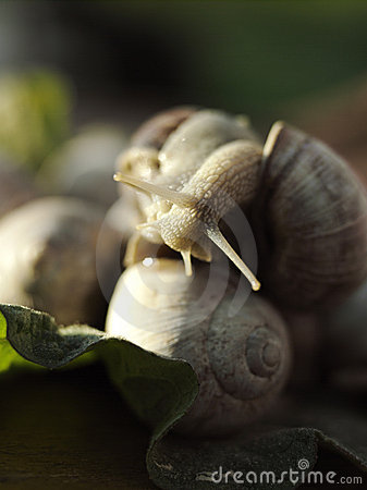 Snails on the leaf