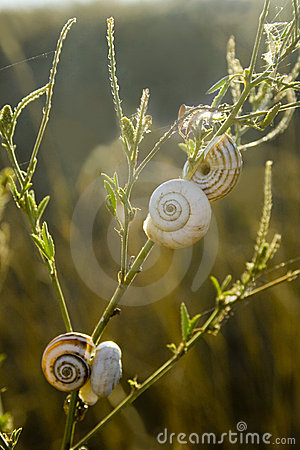 Snails on leaf