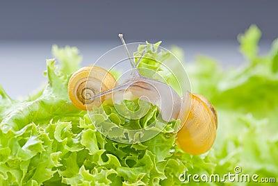 Snails on salad