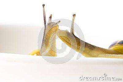 Snails. slow love