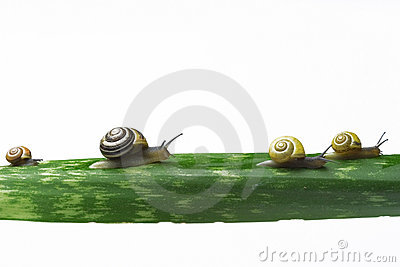 Snails walking on a leaf