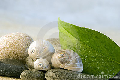 Snailshell and pebble