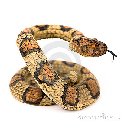 Free Snake Royalty Free Stock Image - 6625176