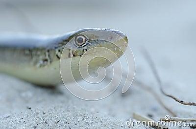 Snake at beach