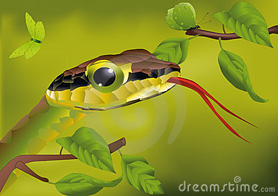 Snake and the butterfly