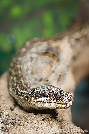 Snake with copyspace