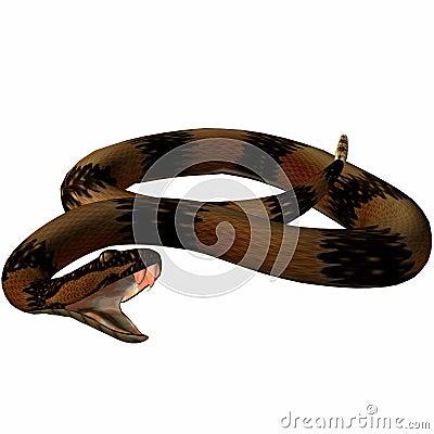 Snake-Death Adder