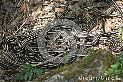 Snake Den 1