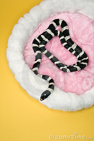 Snake in furry pet bed.