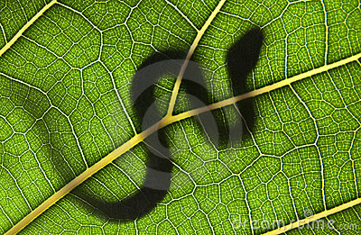 snake on a green leaf