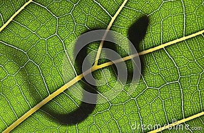 snake on a green leaf