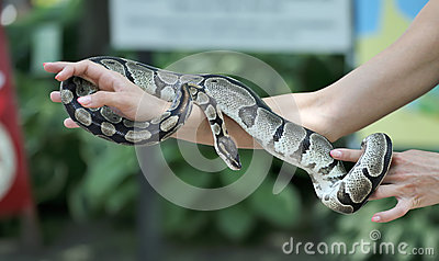 Snake in the hand.