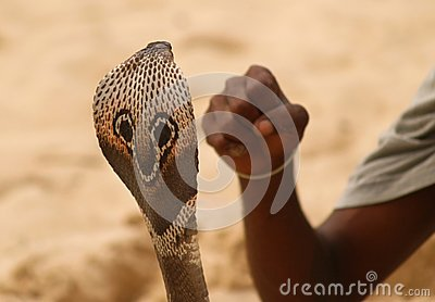 Snake head and human fist